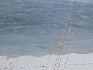 Grass beside the frozen pond