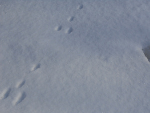 Foot prints in the snow